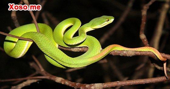 Mơ thấy con rắn